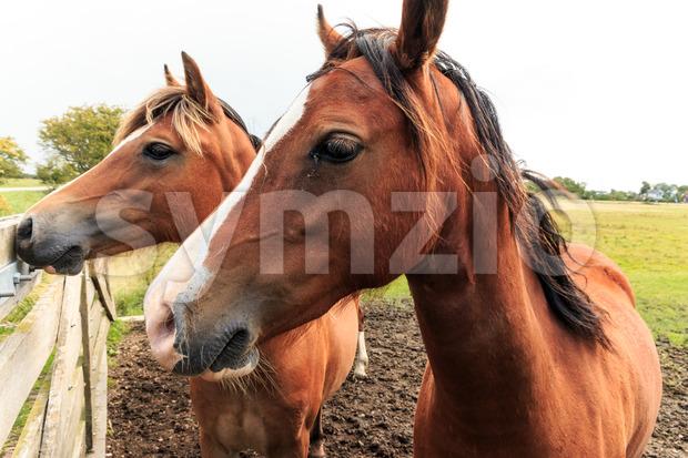 Two horses near fence Stock Photo