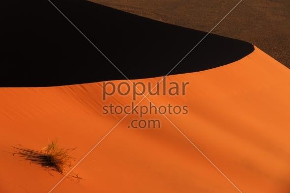 Edge red sanddune Sossusvlei vegetation
