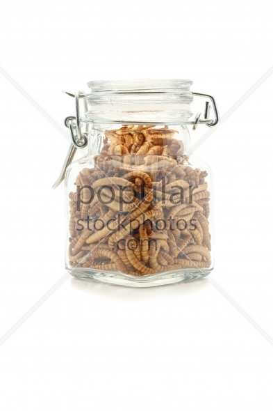 Mealworms in jar