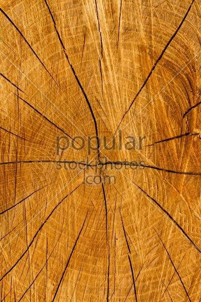 Texture cut tree trunk