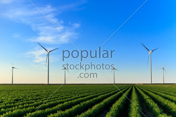 Windmills at field of crops