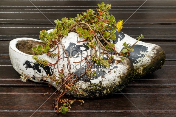 Old Dutch wooden shoes used as flowerpot
