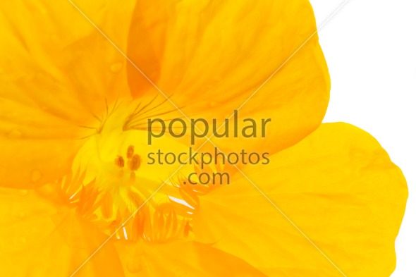 Close up into yellow flower