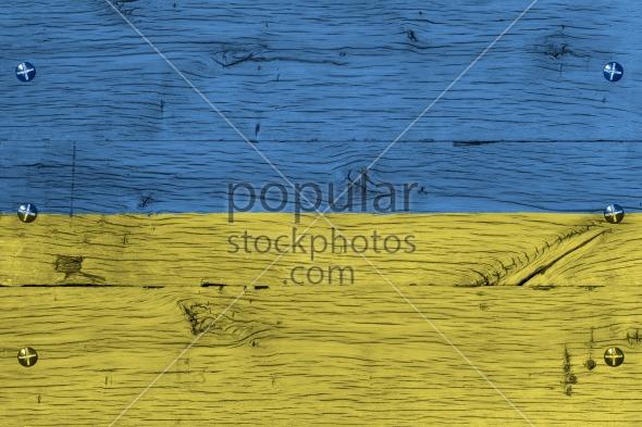 Ukraine national flag painted old oak wood fastened